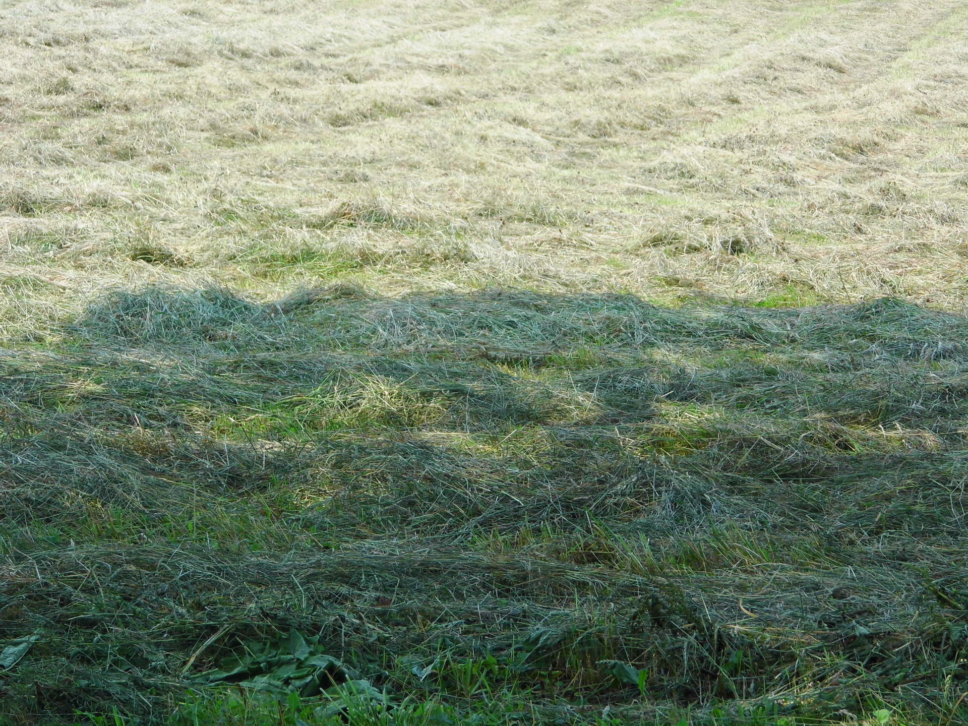 Lines Of Hay
