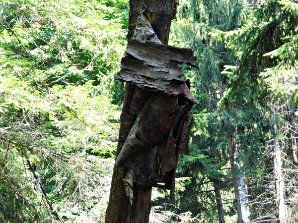 Bark Peeling Off Of Tree