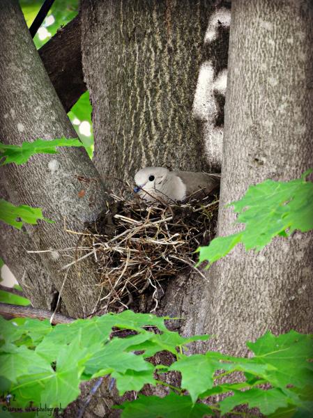 Nesting Turtle II