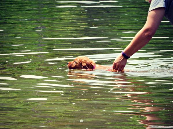 Pup's First Swim II