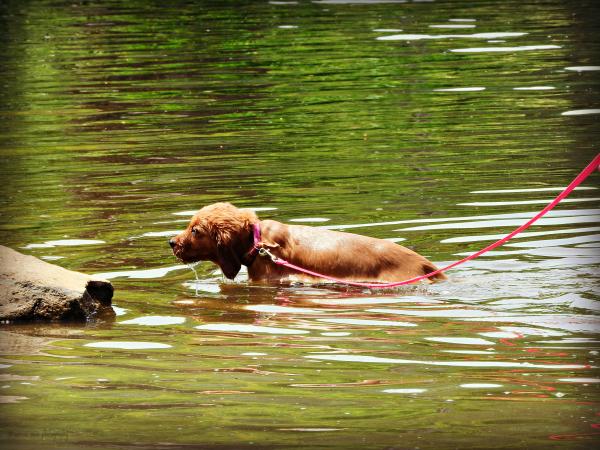 Pup's First Swim