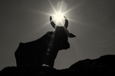 Full Moon in Taurus - Rising Tension