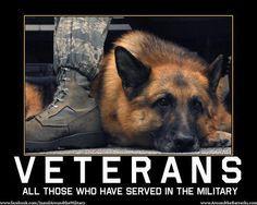 Veteran Dogs