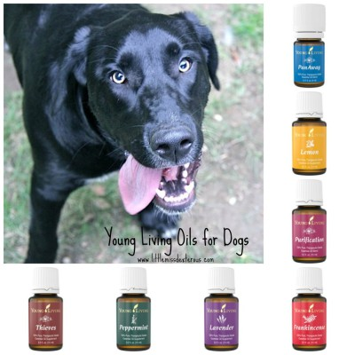 Pet Dental Health and Essential Oils