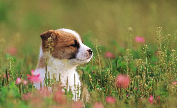 Helpful Spring Cleaning Tips for Your Dogs