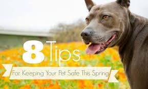 Tips for a Safe Spring