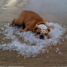 5 Tips for Pet Heat Safety
