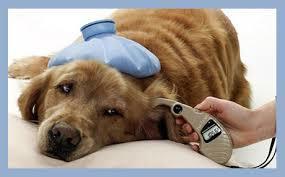 National Pet Diabetes Month