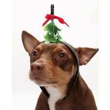 Holiday Plants and Your Dog