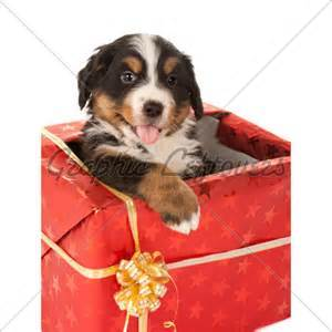 Puppies as Gifts?