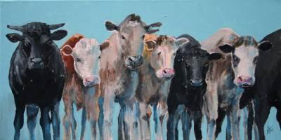 cows, farms, western, rustic