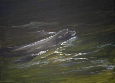 sea lion, pacific, ocean, art