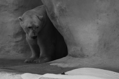 Toledo Zoo - Toledo, OH