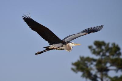 River Landing Golf Course - Wallace, NC