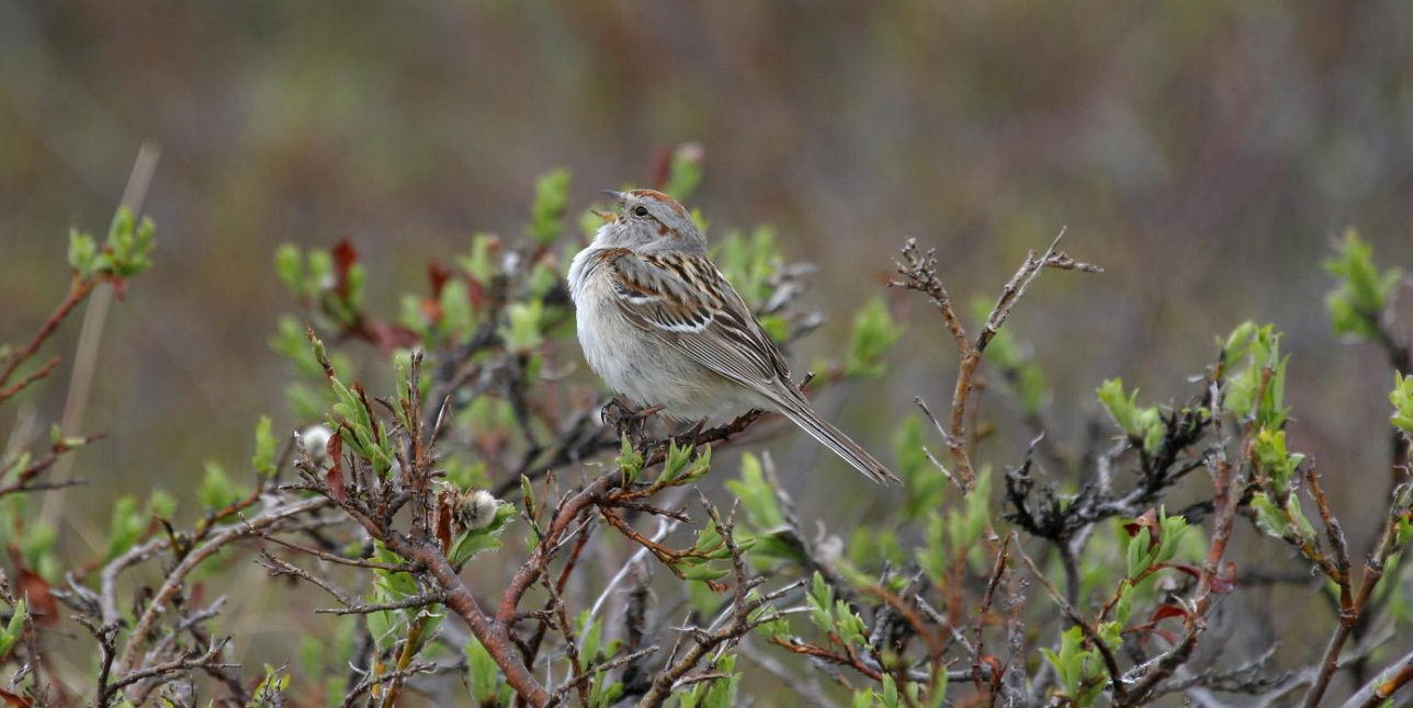 How to attract feathered friends to your garden