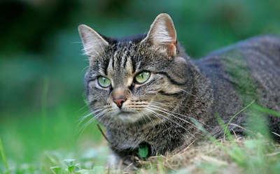 ''Remove all free-ranging cats from the landscape by any means'' - we don't think that's the answer!