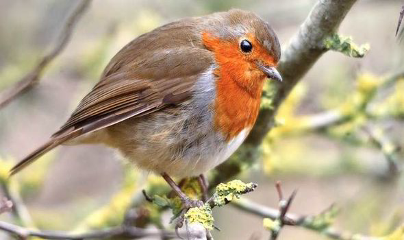 5 birds that you should look out for in your garden this winter