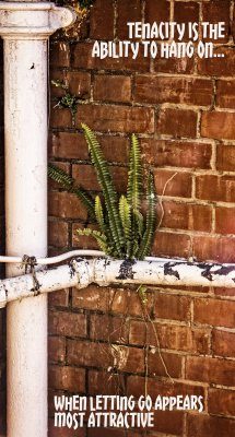 Fern in the pipes (C) DAS2015