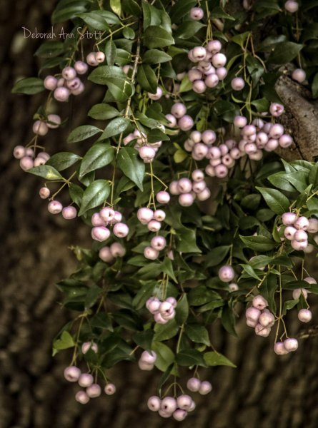 berries, tree, pink, leaves