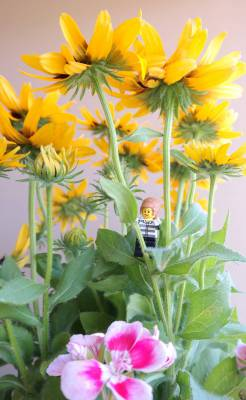 I love hiding in flowers