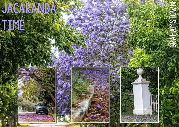 jacaranda, tree, purple, collage