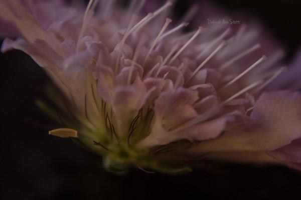 flower, soft