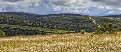 Addo landscape (c) Deborah Ann Stott 2016
