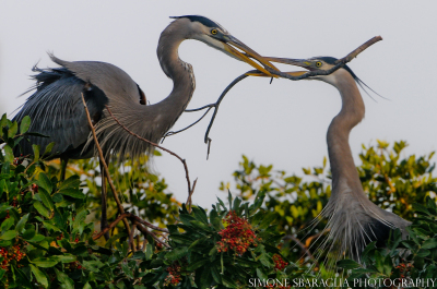 Storie dal pianeta terra - Everglades