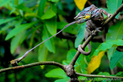 Storie dal pianeta terra - Madagascar