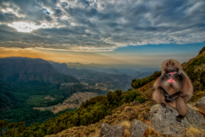 Storie dal pianeta terra - Gelada, le scimmie di montagna