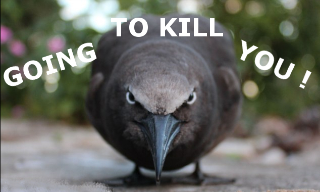 I'm Going To Kill You! :-)
