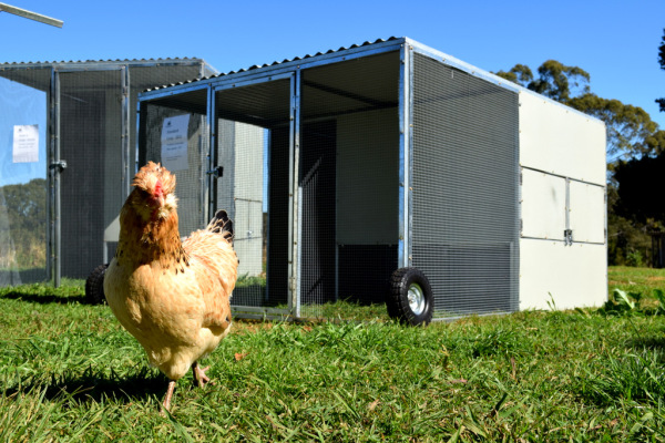 Northern Rivers Poultry