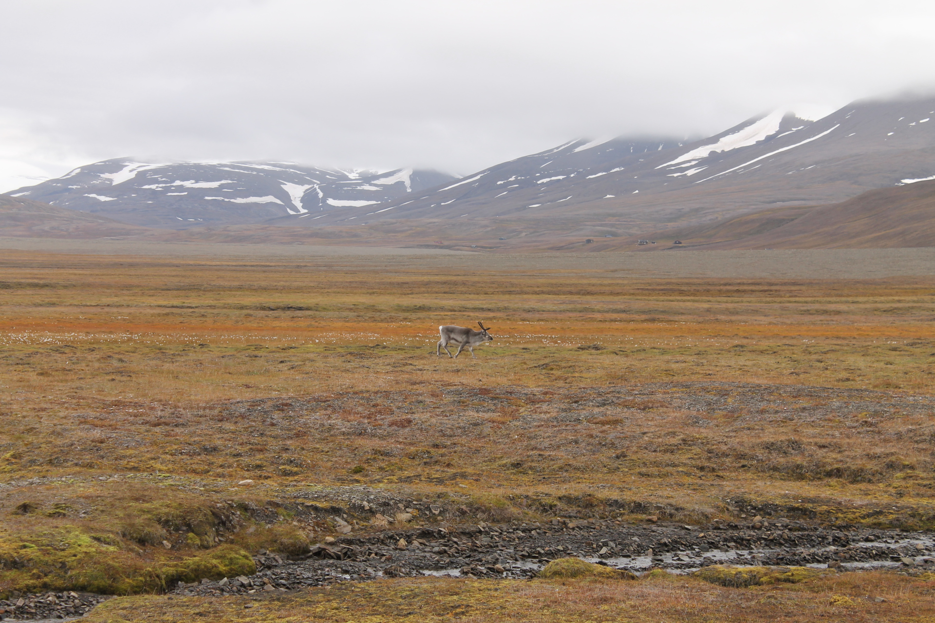 The Adventdalen Valley