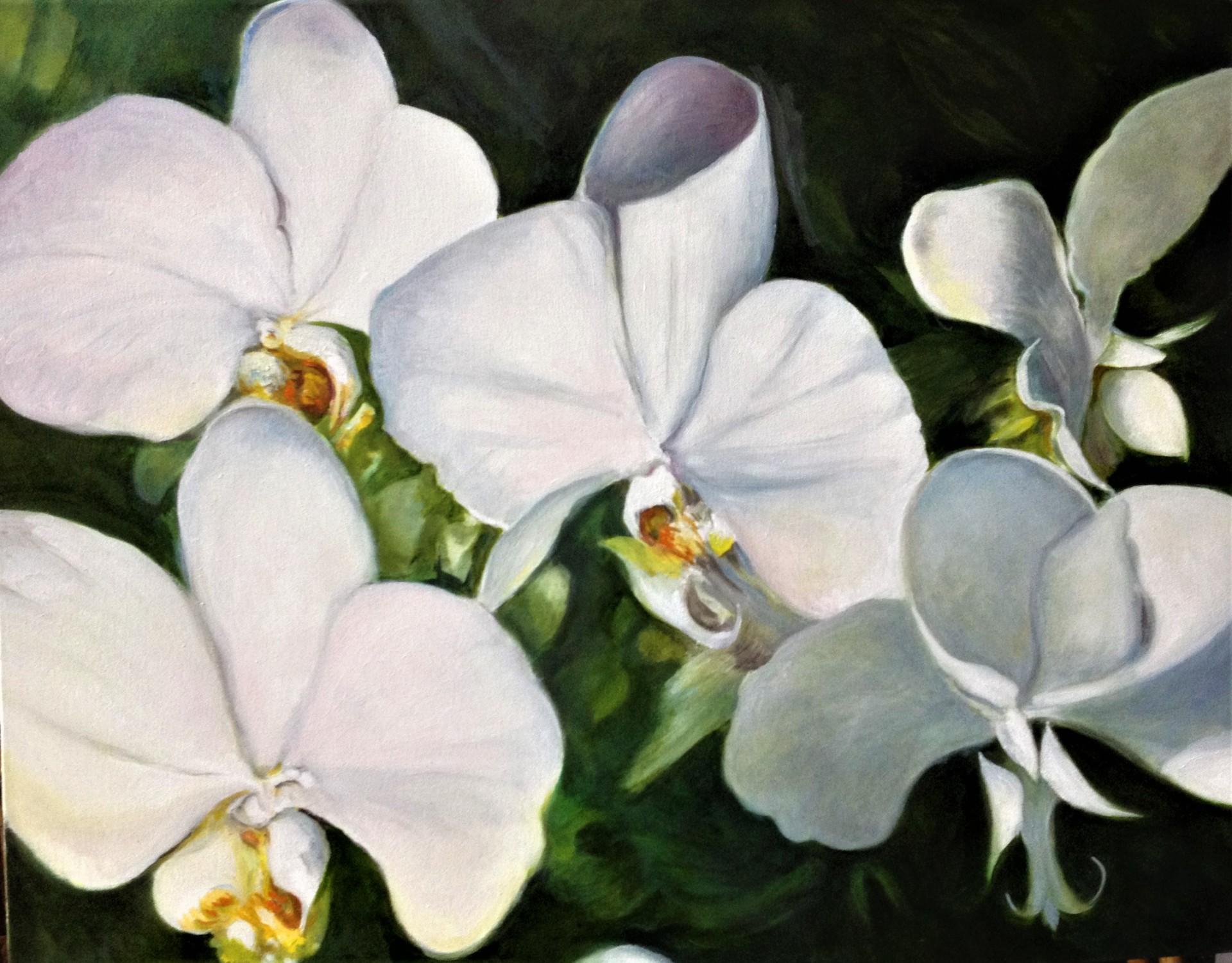 Fancy Orchids