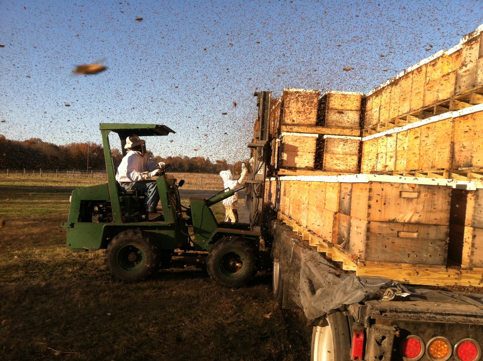 Unloading honeybees Arkansas