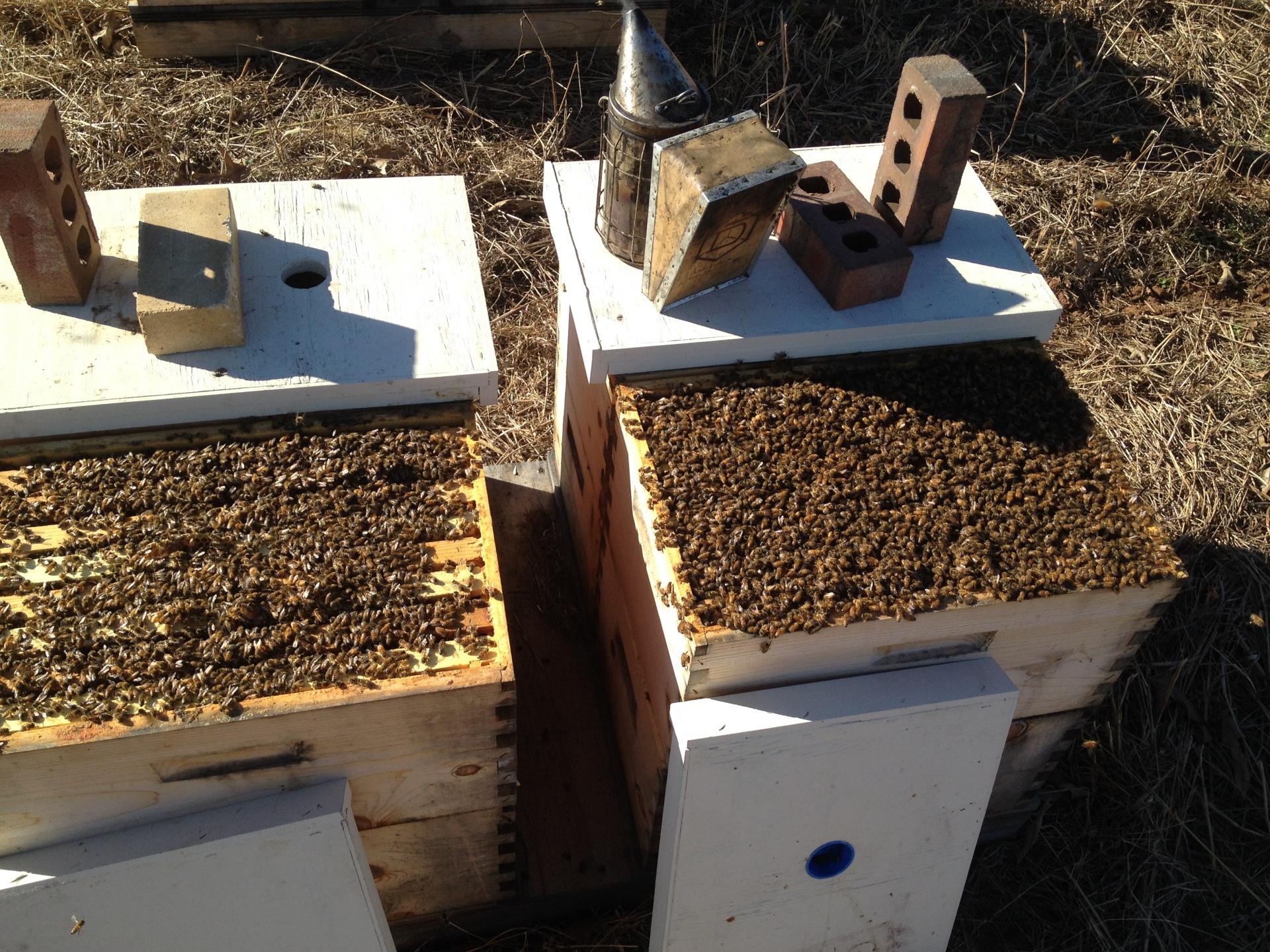 Wisconsin bees