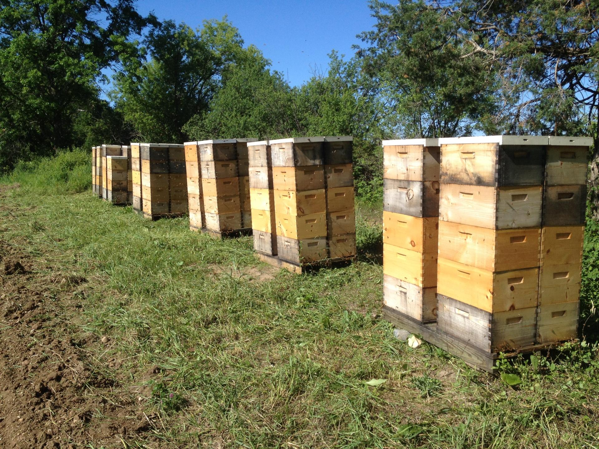Wisconsin Honey