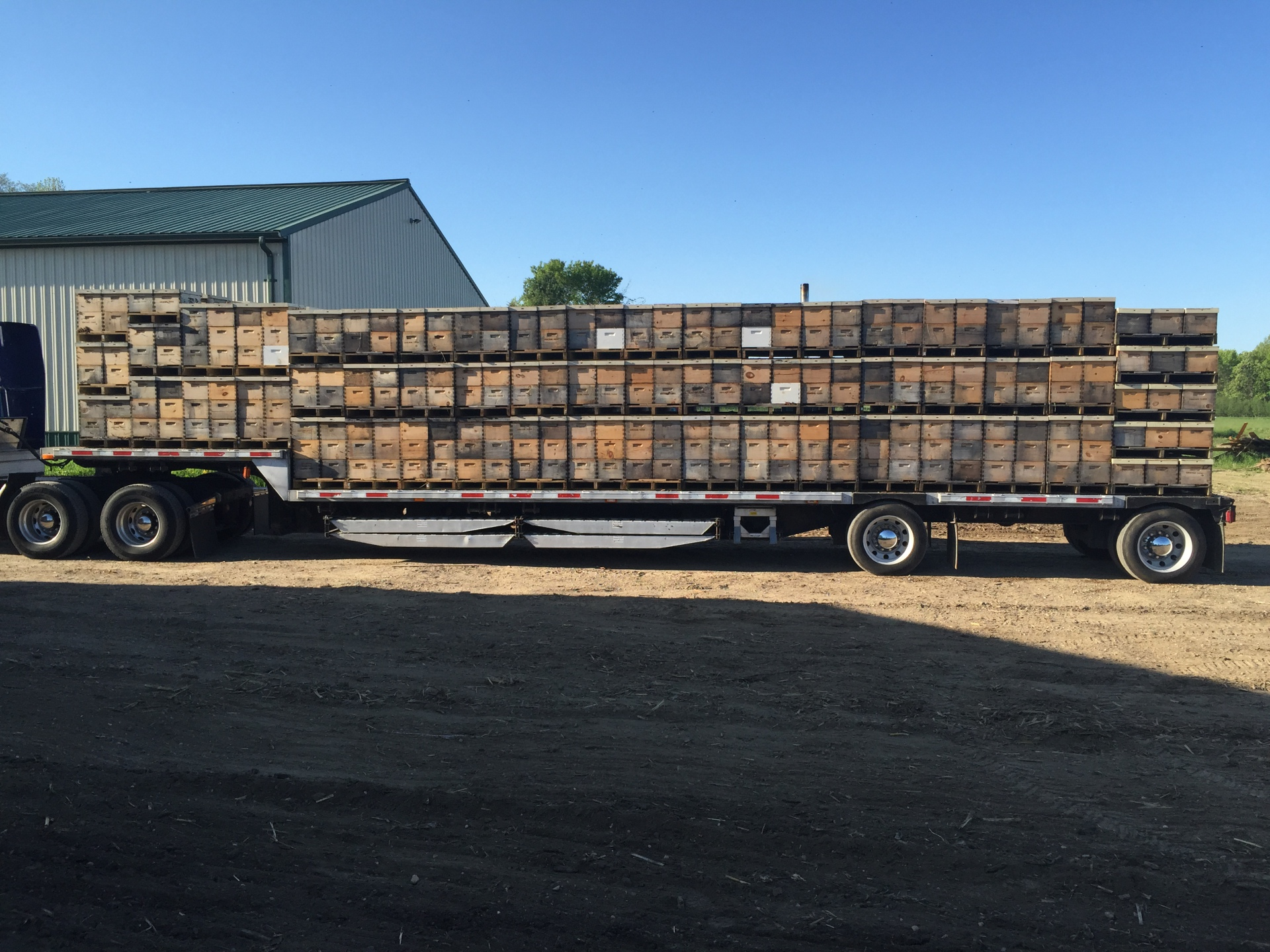 Semi load of Wisconsin bees