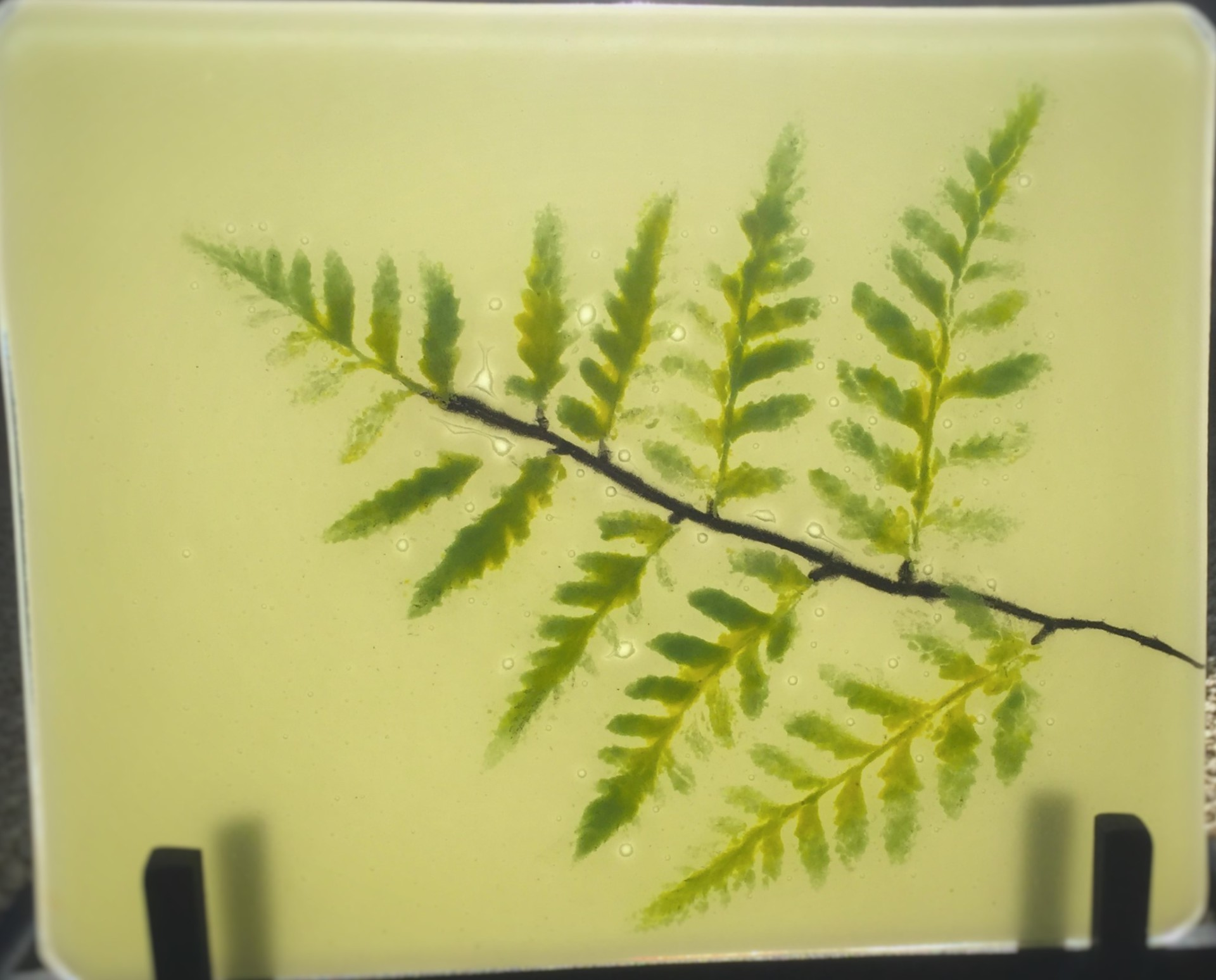 Fossil Vetra Fern