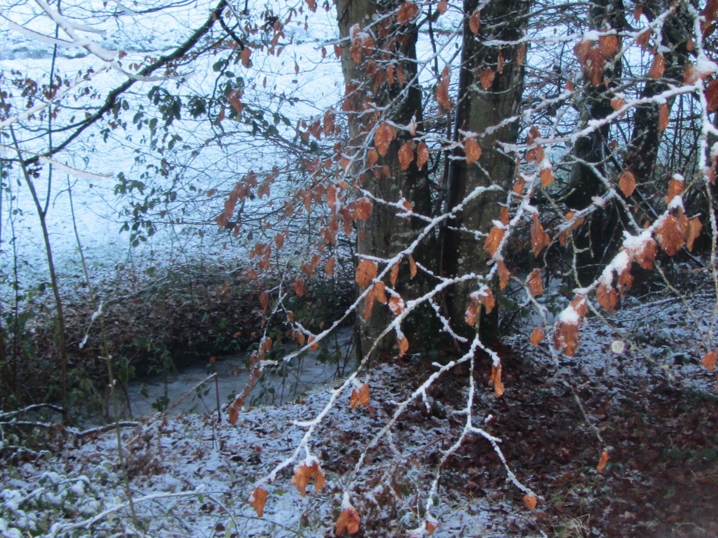 autumn drifts into winter at Le Choisel, Normandy, France