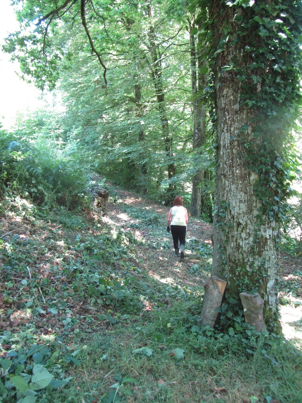 wander through the woods at at Le Choisel, Normandy, France