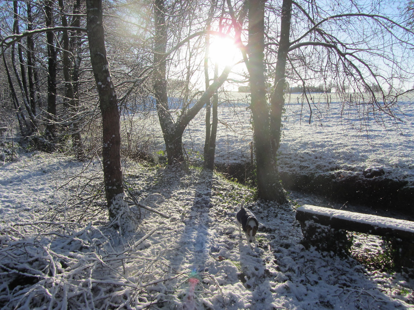 winter sun through the trees at Le Choisel, Normandy, France