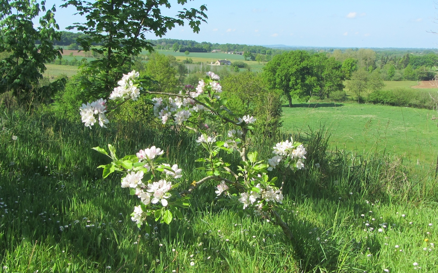 apple blossom time at Le Choisel, Normandy, France