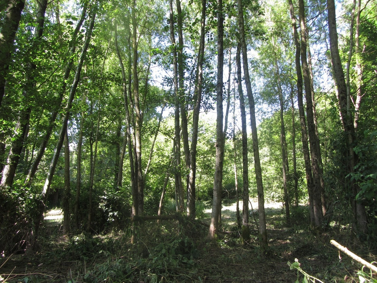 woodland walks at Le Choisel, Normandy, France