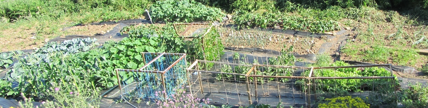 vegetable gardens at Le Choisel, Normandy, France