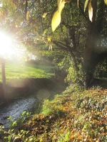 sunlight on the river at Le Choisel, Normandy, France