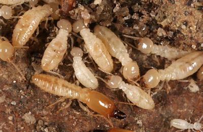 Being Alert of Termite Activity