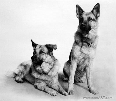 Zeb & Ricko (2007)