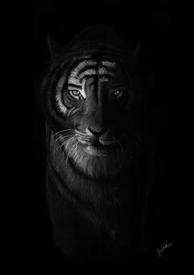 Tiger in the dark by Per Svanström