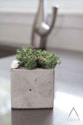 Moss Cube